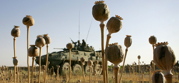 Tanks and poppies