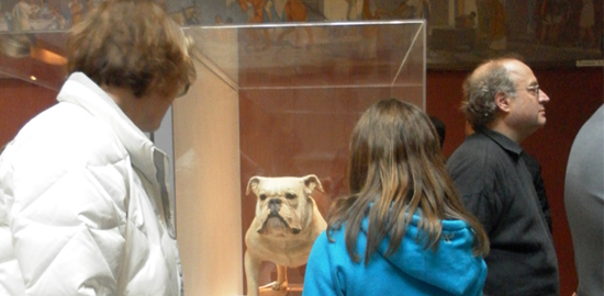 Dog display at a museum