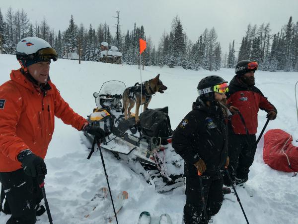 Risk rescue dog 600x450